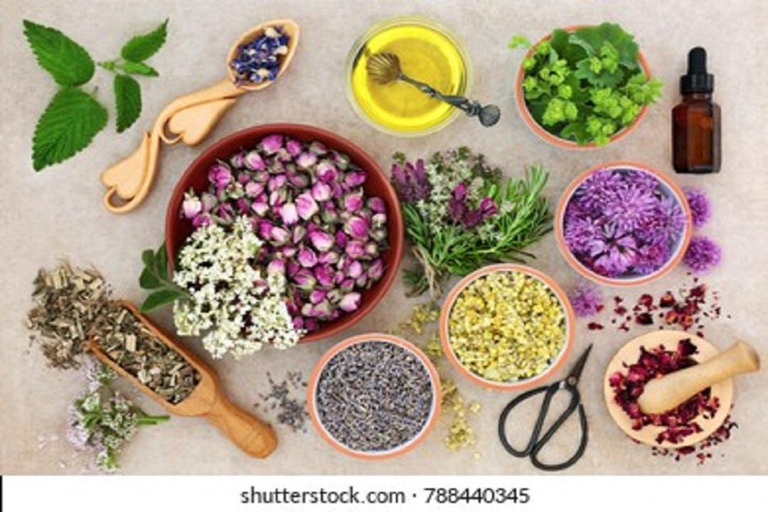 Basic Preparations of Herbs